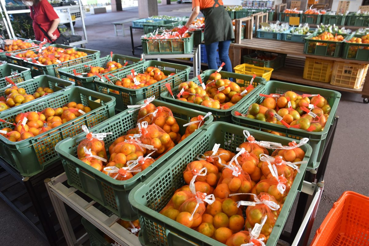 旬の柑橘続々入荷中!